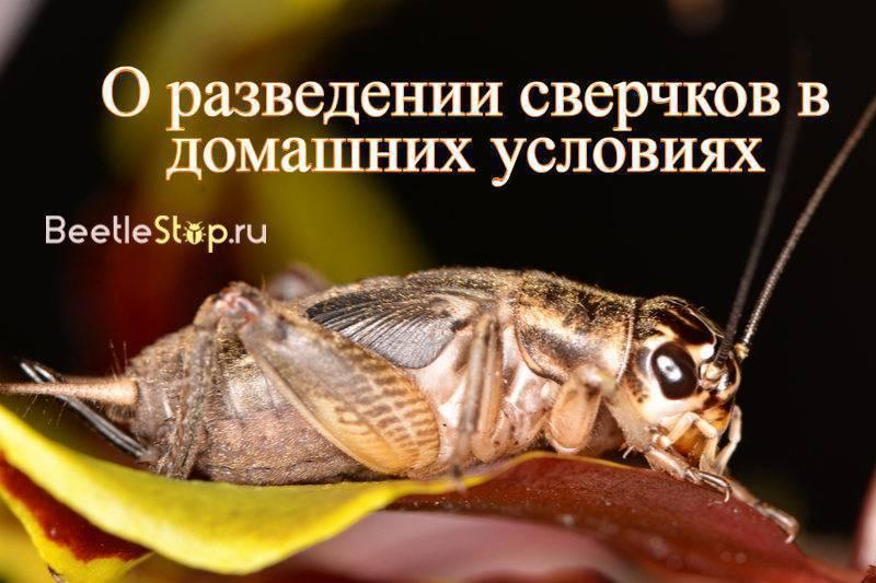 Корм для насекомоядных птиц. живые/свежие кормовые насекомые