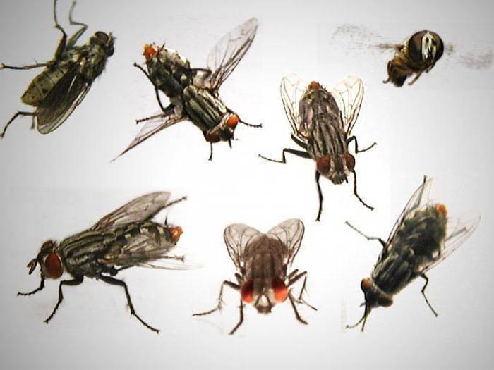 Кусаются ли мухи? Почему в конце лета они нападают на людей?