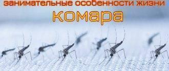 Почему некоторых людей не кусают комары. интересные факты о комарах, или за что уважать кровососа