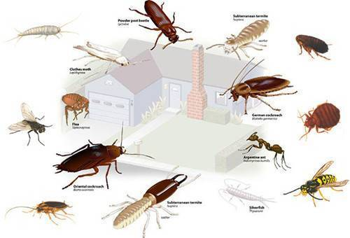 Помогают ли отпугиватели избавиться тараканов?