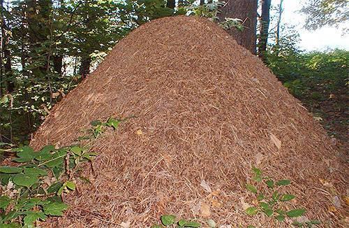К чему снятся муравьи во сне женщине – значение сна, толкование по сонникам