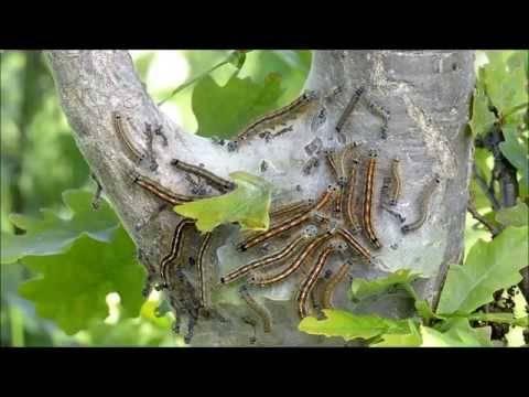 Основные вредители растений на приусадебном участке