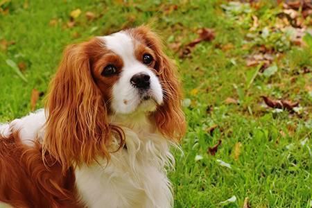 Собачья блоха: как избавиться?