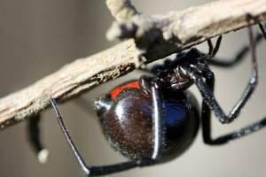 Самые страшные пауки – вся правда об арахнидах. что нужно знать о пауке каракурте