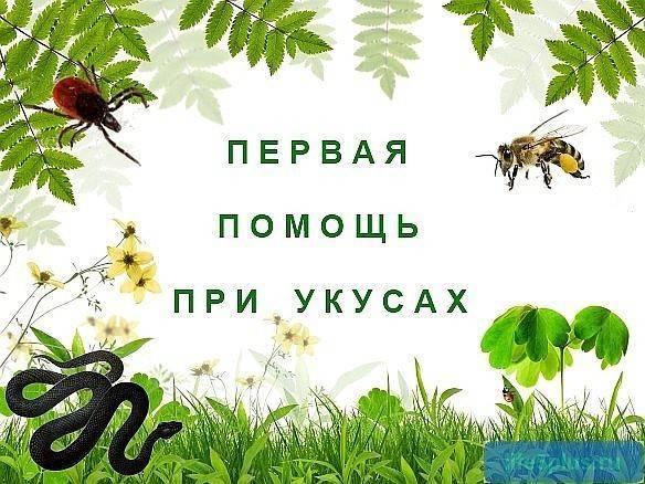 О том, как уберечься от укусов пчел, ос, шершней