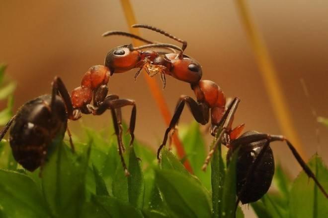 Топ-10 необычных и удивительных муравьёв мира