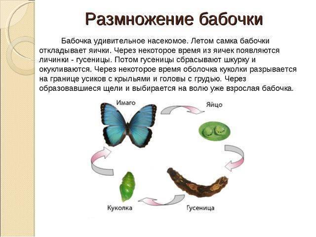 Виды гусениц с фото и названиями