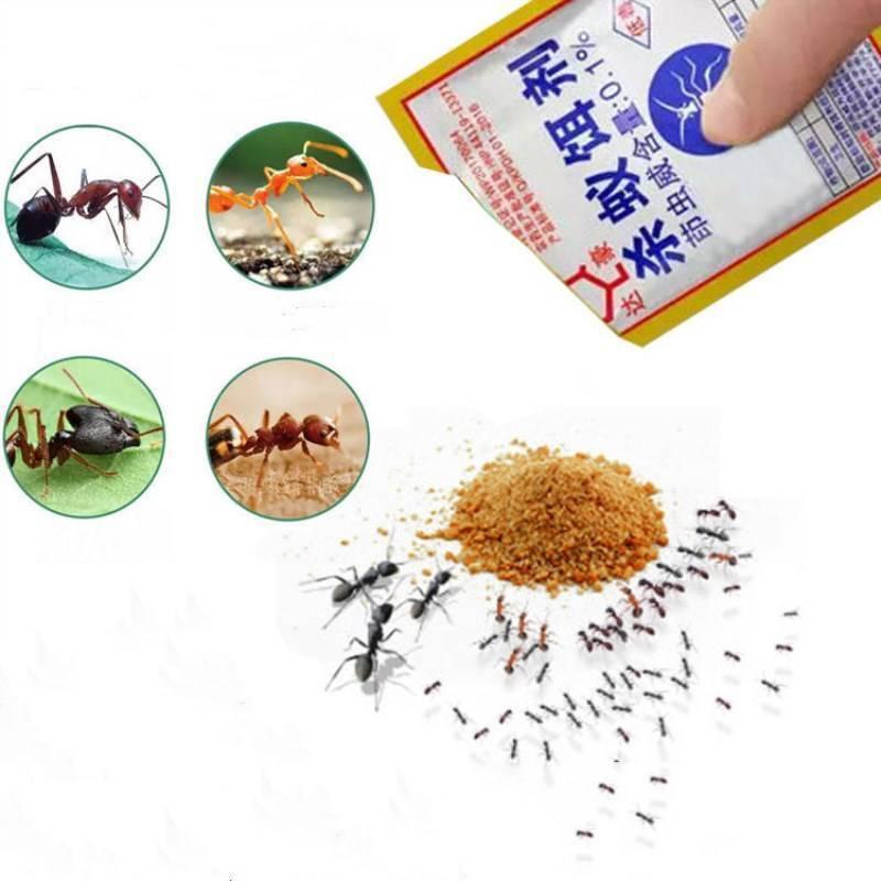 Простые ловушки для муравьев – делаем своими руками