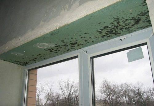 Причины появления и способы борьбы с плесенью на окнах