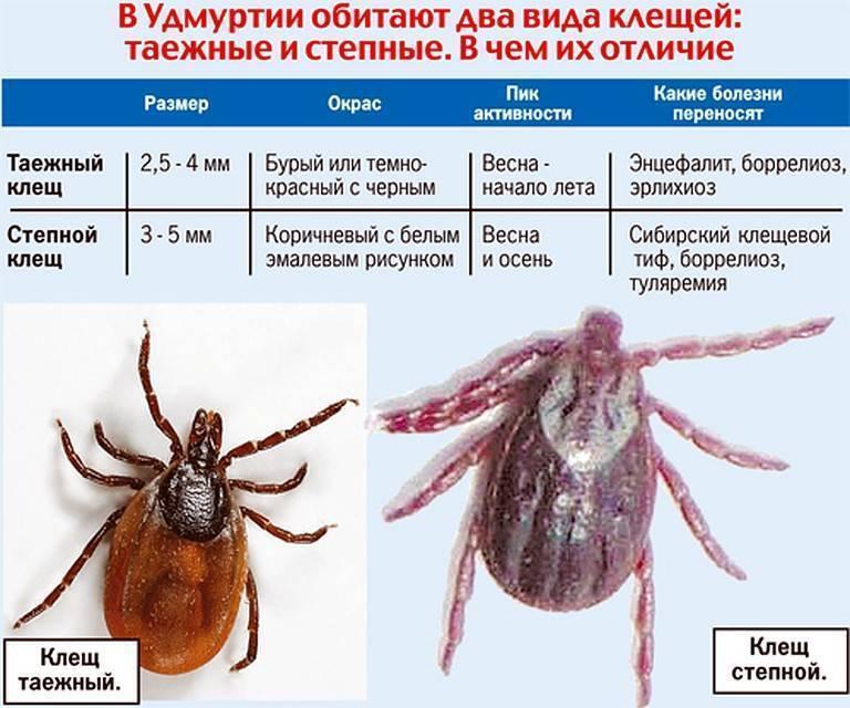 Анализ клеща в Башкортостане – список клиник