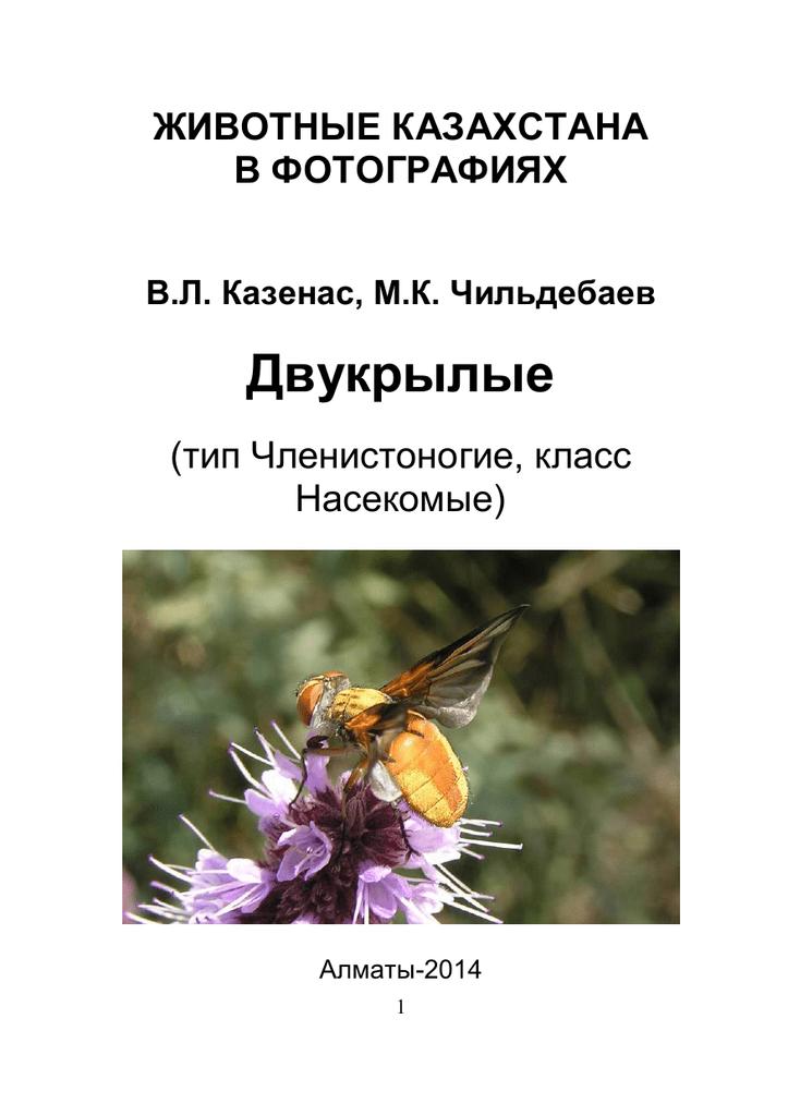 Пчелы сидят на прилетной доске и ничего не делают