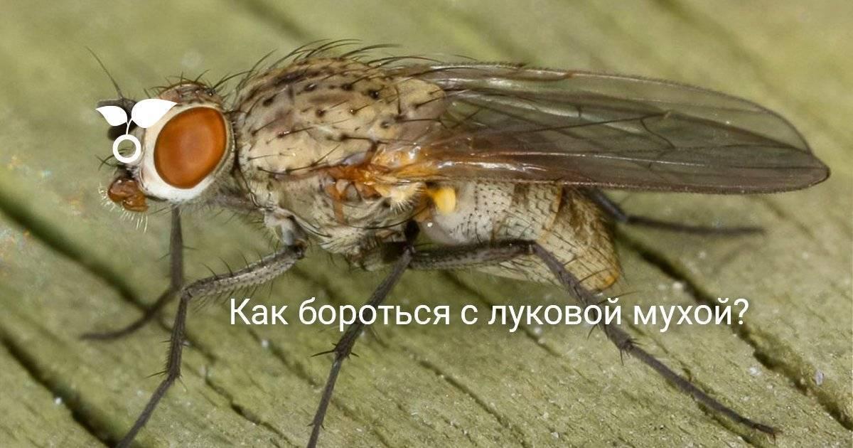 Как убить муху?