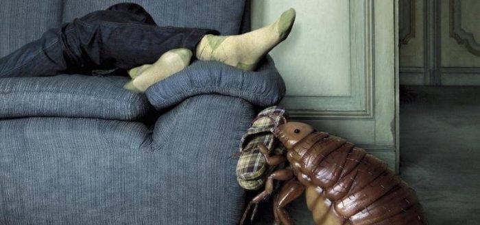 Как избавиться от земляных блох в квартире или частном доме