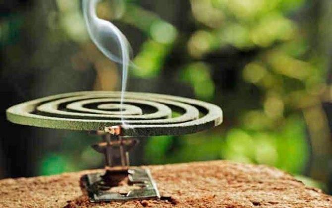 Как эффективно избавиться от комаров в доме
