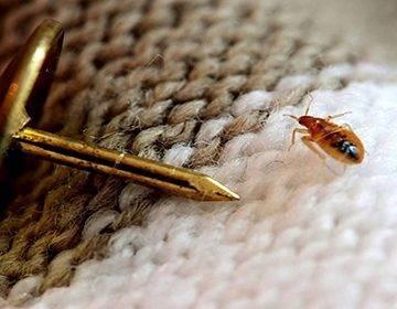 «фенаксин» — порошковый инсектицид от тараканов и клопов