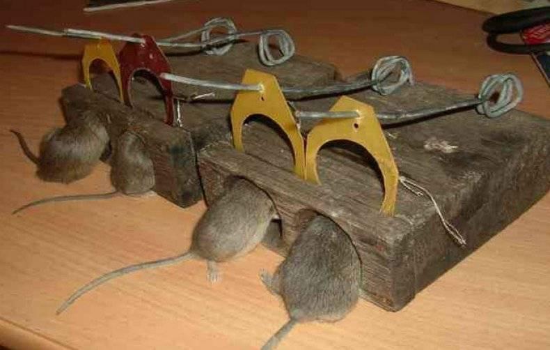Ловушки для крыс и мышей