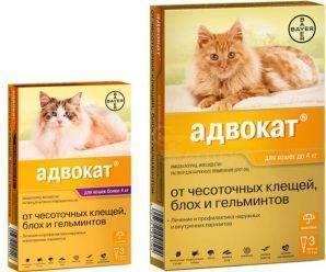Капли чистотел от клещей и блох для кошек