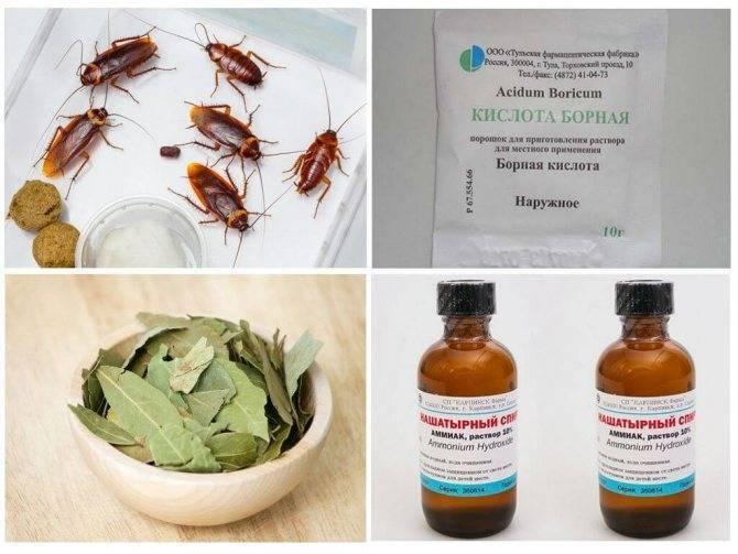 4 версии: почему тараканов называют стасиками и другими именами?