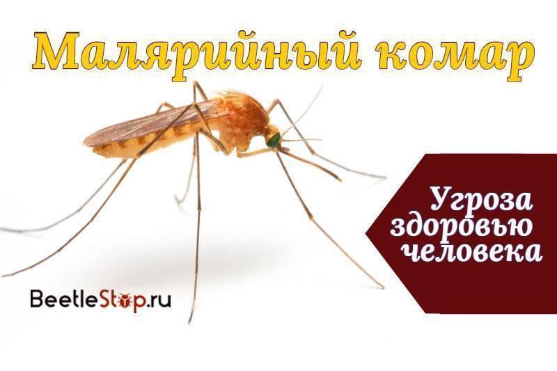 К чему снятся комары в большом количестве. что означает образ комара во сне – толкования по сонникам и согласно народным поверьям