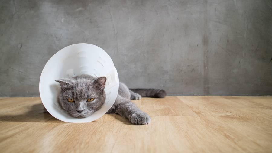 Кошачьи блохи в квартире: как избавиться от незваных гостей