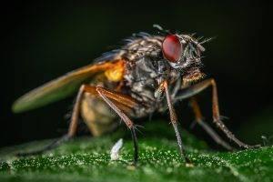 Какие средства помогут от мух на даче