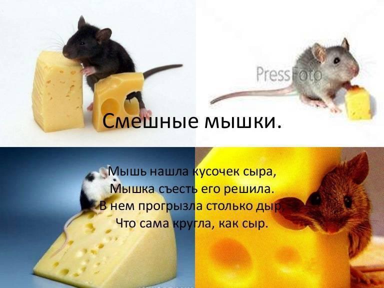 Мыши едят сыр или нет.