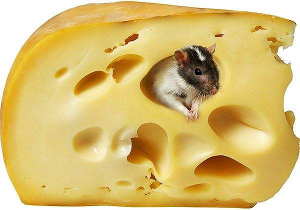 Как поймать мышь в квартире без мышеловки
