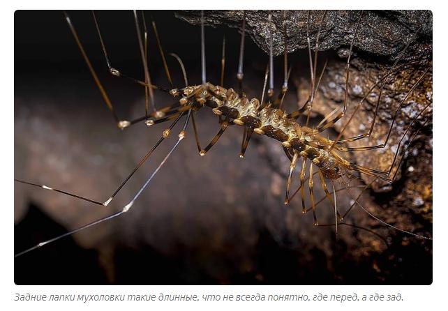 Стрекоза — виды и описание