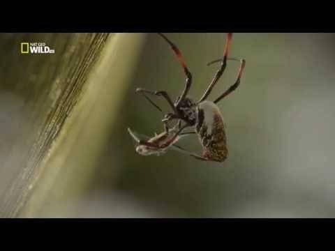 Сколько лап у паука
