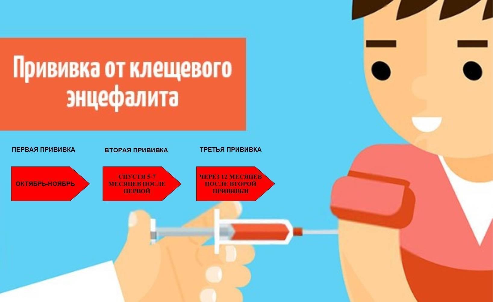 Схема прививок от клещевого энцефалита