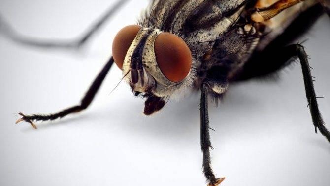 Образ жизни опасной африканской мухи цеце
