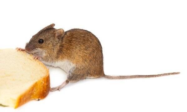 Виды компьютерных мышей