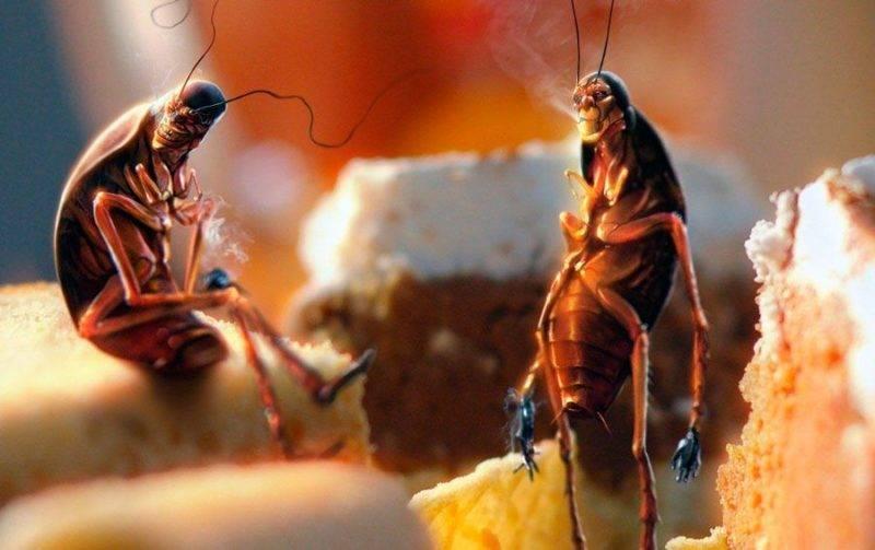 Откуда берутся тараканы в квартире или доме? средства борьбы с ними и как не допустить появления