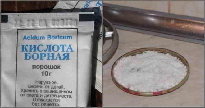 Рецепт борной кислоты от муравьёв
