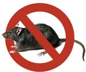 Какой отпугиватель крыс и мышей выбрать лучше всего?