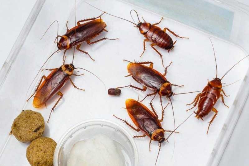 Тараканы в квартире еде могут прятаться?