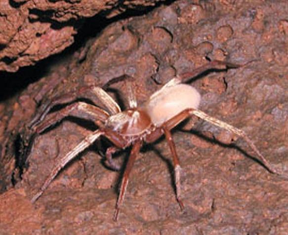 7 видов клещей, паразитирующих на животных – описание, фото, как от них избавиться