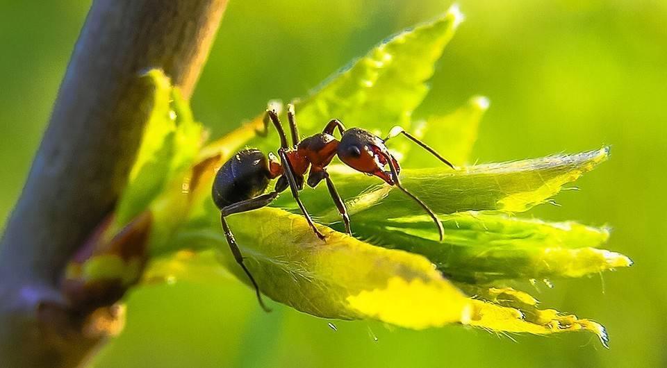 Как избавиться в квартире от желтых муравьев. средства от желтых муравьев в квартире и саду