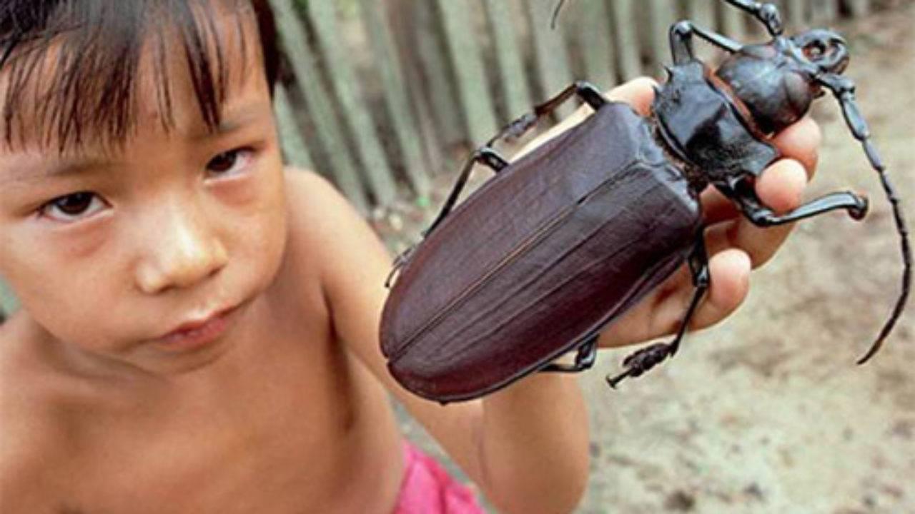 Укусы тараканов: правда или вымысел