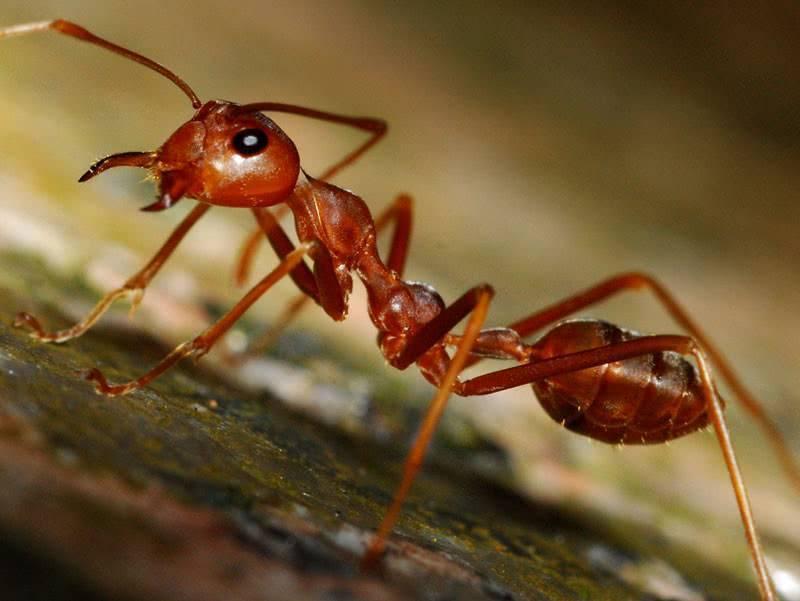 Как избавиться от муравьёв в доме народными средствами. лучшие рецепты, травы для отпугивания