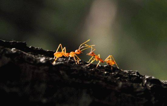 Во сне приснились муравьи к чему. народные поверья и современные сонники расскажут, к чему снятся муравьи