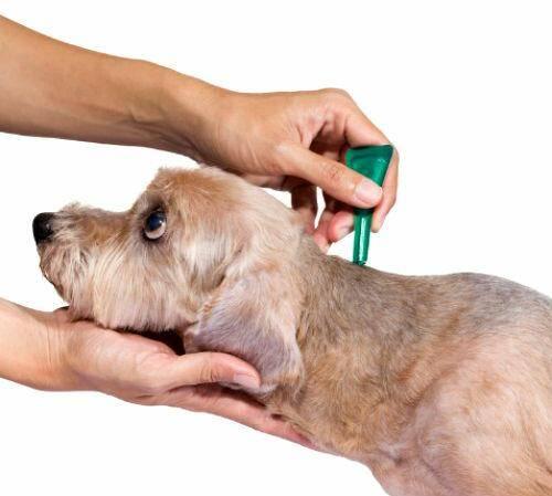 Как правильно капать капли от блох кошке и собаке: инструкция по применению