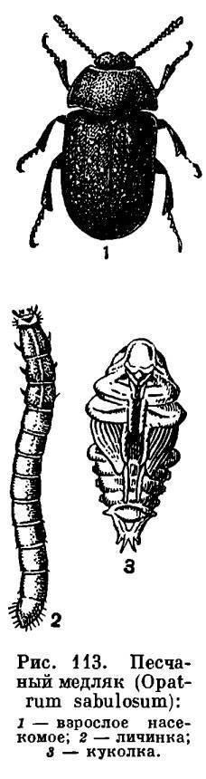 Как бороться с луговым мотыльком
