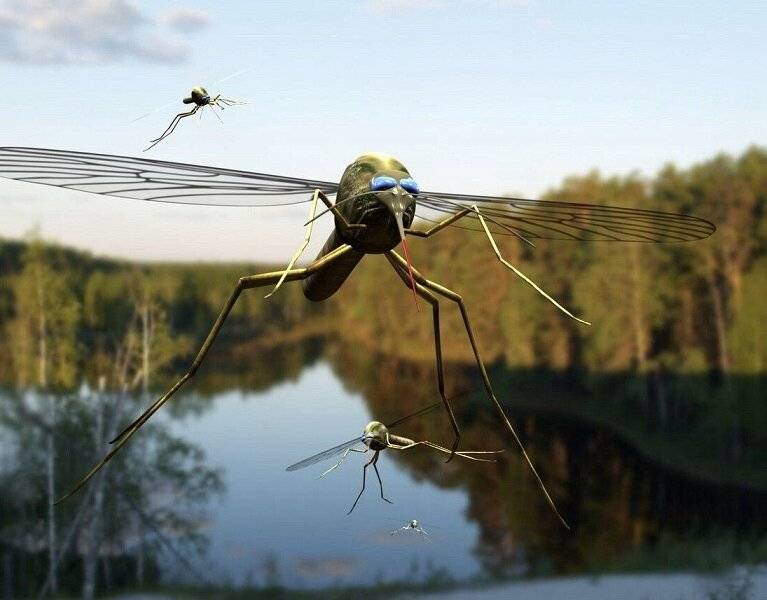 Как защитить от комаров дачу или участок