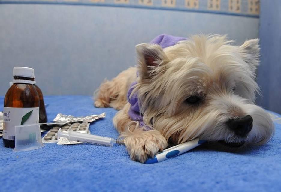 Прививка для собак от блох и клещей