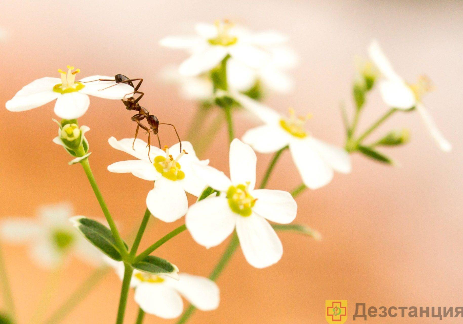 Как избавиться от муравьев в квартире навсегда, рыжие муравьи дома