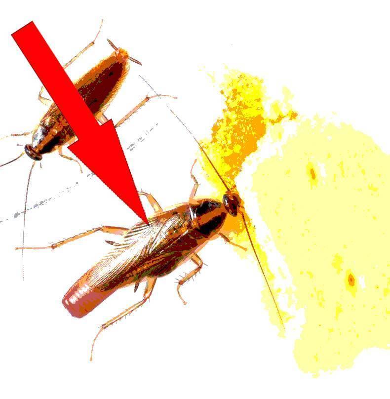 Как избавиться от тараканов быстро, просто, навсегда