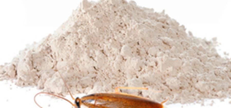 Средство от тараканов тиурам: характеристики, применение, особенности
