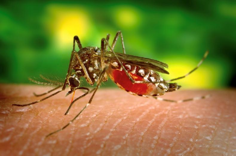 Что нужно делать, если вас укусил комар, инструкция