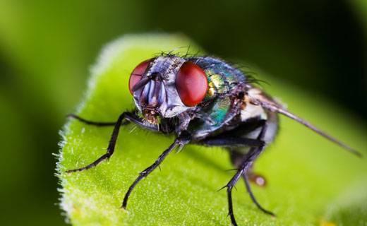 Сонник толкование снов к чему снятся насекомые